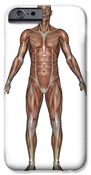 Muscular Digital iPhone Cases - Anatomy Of Male Muscular System, Front iPhone Case by Elena Duvernay