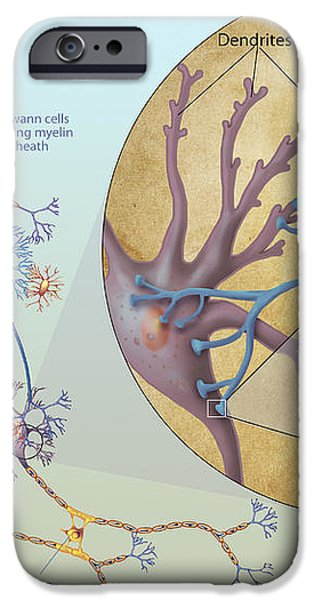 Anatomy Of Neurons iPhone Case by Carlyn Iverson