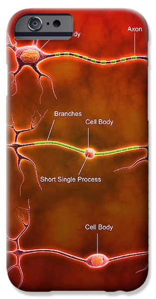 Anatomy Structure Of Neurons iPhone Case by Stocktrek Images