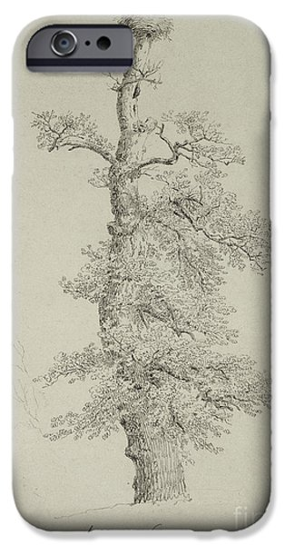Stork iPhone Cases - Ancient Oak Tree with a Storks Nest iPhone Case by Caspar David Friedrich
