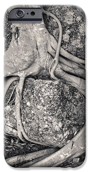 Ancient Roots iPhone Case by Adam Romanowicz