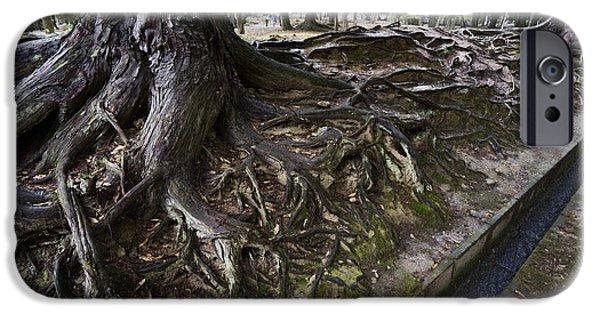 Nara iPhone Cases - ANCIENT TREES of NARA PARK iPhone Case by Daniel Hagerman