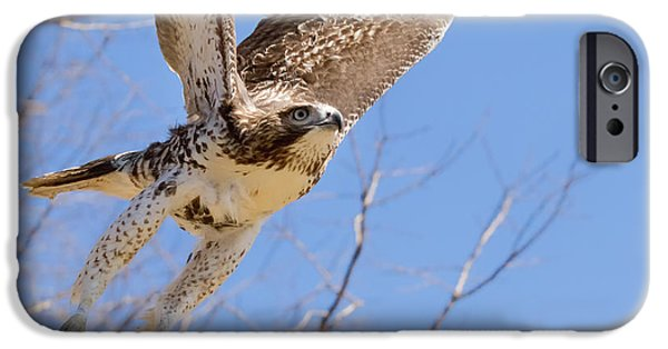 Redtail Hawk iPhone Cases - And Away I Go iPhone Case by Bill  Wakeley