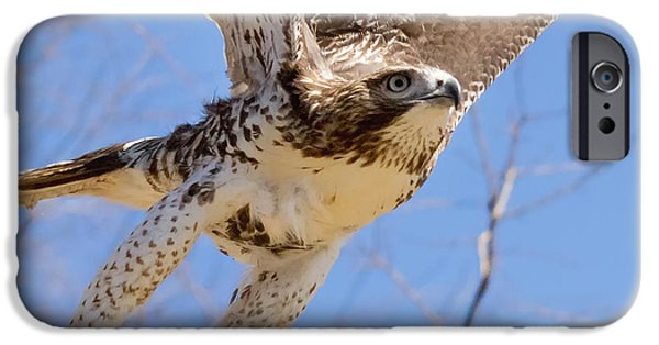 Redtail Hawk iPhone Cases - And Away I Go Square iPhone Case by Bill  Wakeley