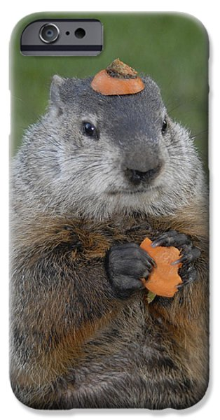 Groundhog iPhone Cases - And have you looked in the mirror lately iPhone Case by Paul W Faust -  Impressions of Light