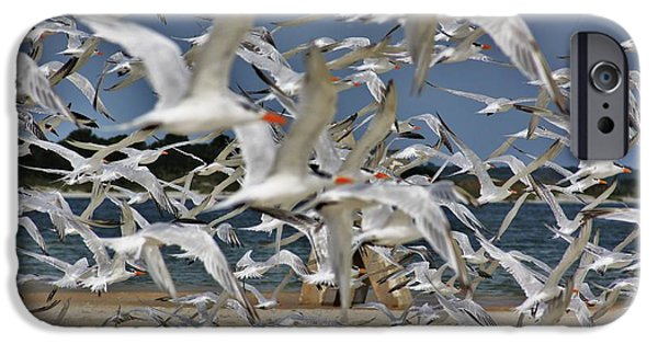 Flight iPhone Cases - And More Snow iPhone Case by Chuck  Hicks