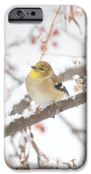 Snow Scene iPhone Cases - And Now What iPhone Case by Kristin Hatt