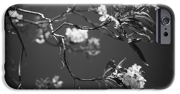 Monotone iPhone Cases - And Spring Became the Summer iPhone Case by Laurie Search