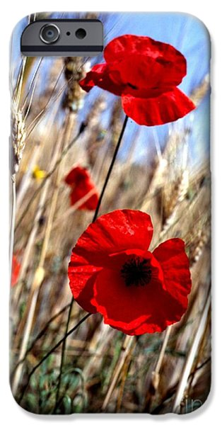 And Then They Mowed a Tuscan Field iPhone Case by Anna Lisa Yoder