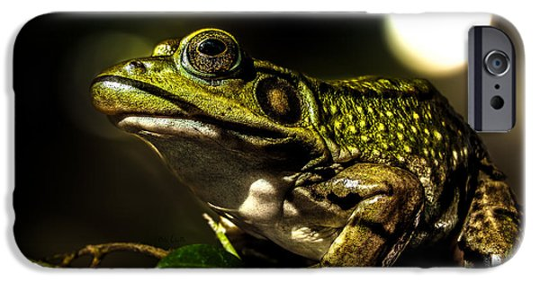 Amphibian iPhone Cases - And This Frog Can Sing iPhone Case by Bob Orsillo