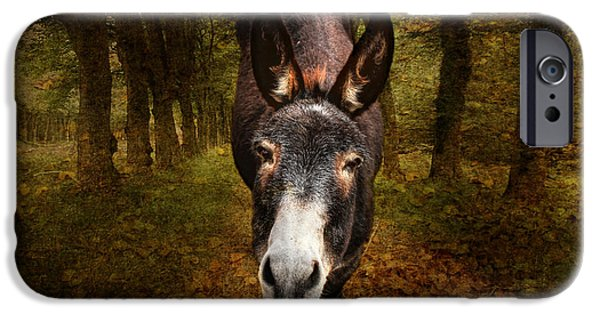 Donkey iPhone Cases - And You Are  ??? iPhone Case by Donna Kennedy