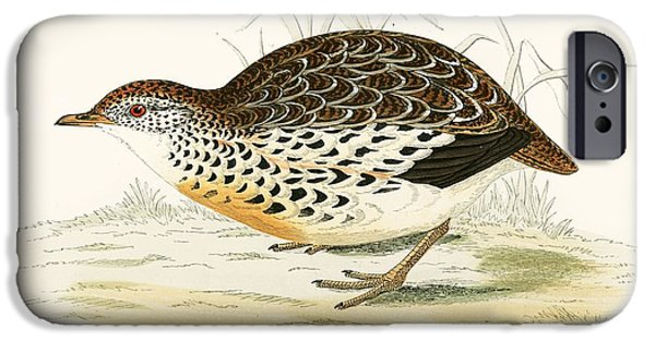 Hunting Bird iPhone Cases - Andalusian Quail iPhone Case by Beverley R. Morris