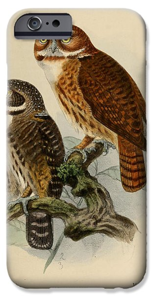 Ornithology iPhone Cases - Andean Pygmy Owl iPhone Case by J G Keulemans