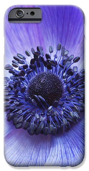 Anther iPhone Cases - Anemone Coronaria iPhone Case by Tim Gainey