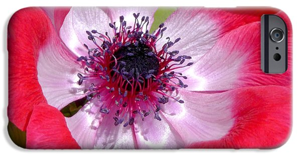 Red iPhone Cases - Anemone De Caen iPhone Case by Rona Black
