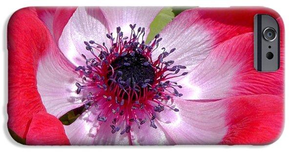 Floral Art iPhone Cases - Anemone De Caen iPhone Case by Rona Black
