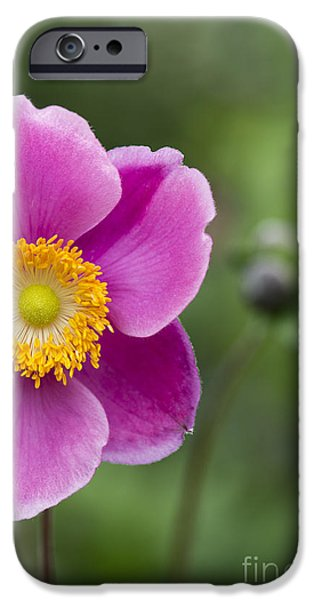 Anther iPhone Cases - Anemone iPhone Case by Tim Gainey