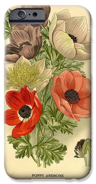 Botanical Drawings iPhone Cases - Anenomes iPhone Case by Unknown Artist