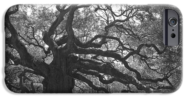 Gnarly iPhone Cases - Angel Oak II - Black and White iPhone Case by Suzanne Gaff