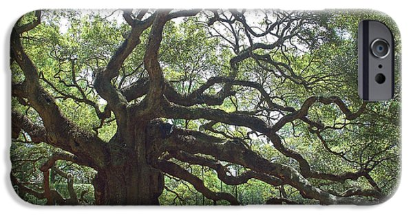 Gnarly iPhone Cases - Angel Oak II iPhone Case by Suzanne Gaff