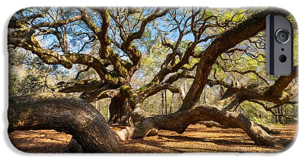 Dave iPhone Cases - Angel Oak Tree Charleston SC iPhone Case by Dave Allen