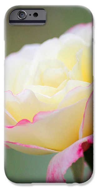 Recently Sold -  - Summer iPhone Cases - Angel of Roses iPhone Case by  The Art Of Marilyn Ridoutt-Greene