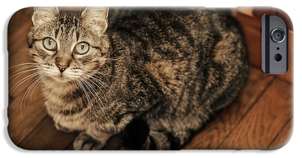 American Shorthair iPhone Cases - Angelic iPhone Case by Anita Miller