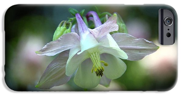 Andrea Lazar iPhone Cases - Angelic Aquilegia iPhone Case by  Andrea Lazar