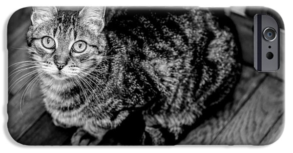 American Shorthair iPhone Cases - Angelic BW iPhone Case by Anita Miller