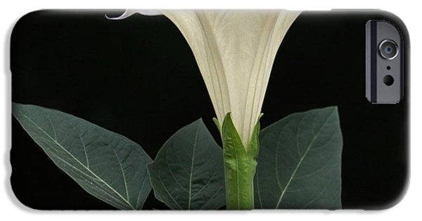 Night Angel iPhone Cases - Angels Trumpet Datura iPhone Case by Angie Vogel