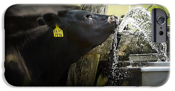 Black Angus iPhone Cases - Angus drinking water iPhone Case by Todd Bielby