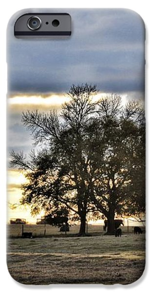 Angus Evening iPhone Case by Jan Amiss Photography