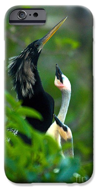 Anhinga iPhone Cases - Anhinga Adult With Chicks iPhone Case by Mark Newman