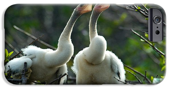 Anhinga iPhone Cases - Anhinga Chicks iPhone Case by Mark Newman