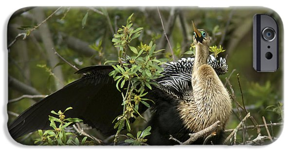 Anhinga iPhone Cases - Anhinga Mama iPhone Case by Phill  Doherty
