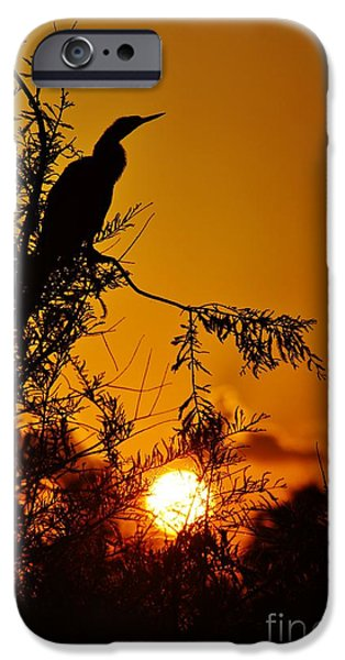 Lynda Dawson-youngclaus Photographer iPhone Cases - Anhinga Sunset iPhone Case by Lynda Dawson-Youngclaus