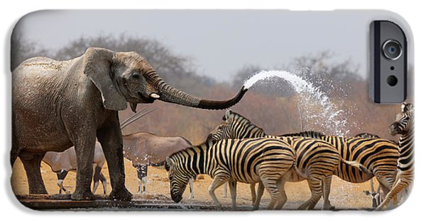 Elephants Photographs iPhone Cases - Animal humour iPhone Case by Johan Swanepoel