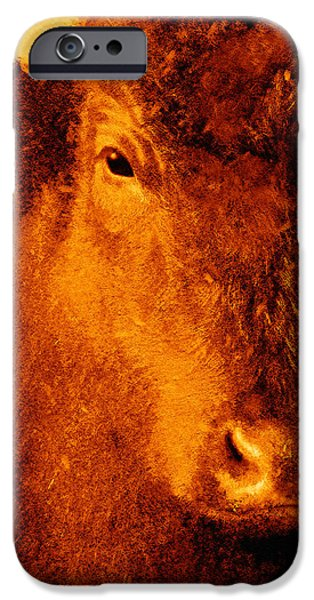 animals- cows- Brown Cow iPhone Case by Ann Powell