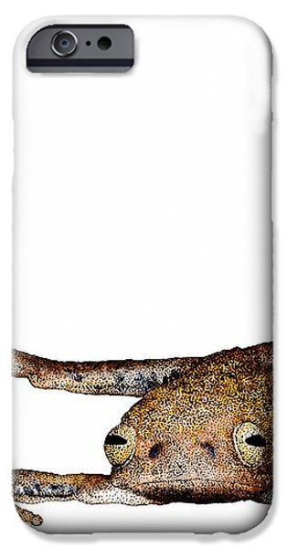 Annam Flying Frog iPhone Case by Roger Hall