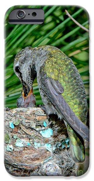 Feeds Chicks iPhone Cases - Annas Hummingbird Feeding Young iPhone Case by Anthony Mercieca
