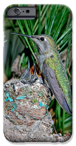 Feeding Young iPhone Cases - Annas Hummingbird With Young iPhone Case by Anthony Mercieca