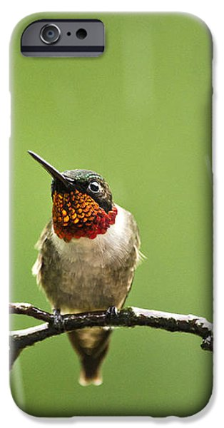 Another Rainy Day Hummingbird iPhone Case by Christina Rollo
