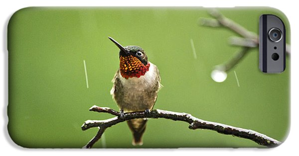 Archilochus Colubris iPhone Cases - Another Rainy Day Hummingbird iPhone Case by Christina Rollo