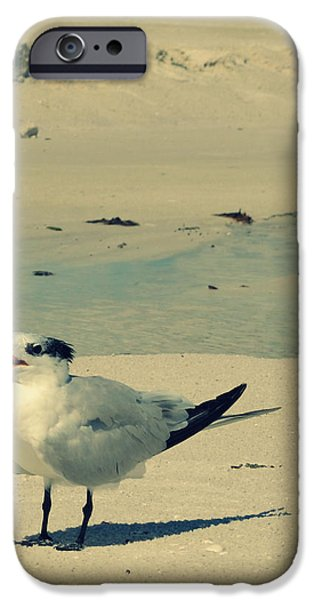 Sea Birds Digital Art iPhone Cases - Another Seagull at the Beach iPhone Case by Patricia Awapara