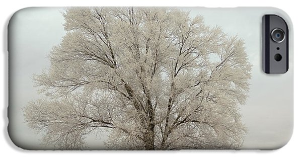 Snow iPhone Cases - Another Tree iPhone Case by Gloria Pasko