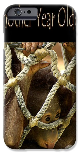Orangutan iPhone Cases - Another Year Older iPhone Case by Carolyn Marshall