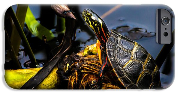 Reptiles iPhone Cases - Ant Meets Turtle iPhone Case by Bob Orsillo