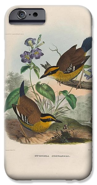 Botanical Drawings iPhone Cases - Ant Thrushes iPhone Case by  D G  Elliot