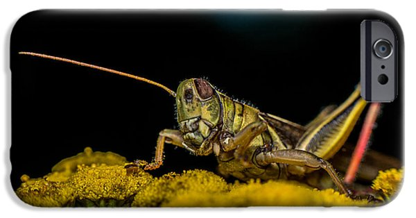 Cricket iPhone Cases - Antenna Down iPhone Case by Paul Freidlund
