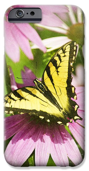 Torn iPhone Cases - Antique Butterfly Postcard No. 3022 iPhone Case by Christina Rollo